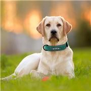 ApolloBox Custom Leather Dog Collar